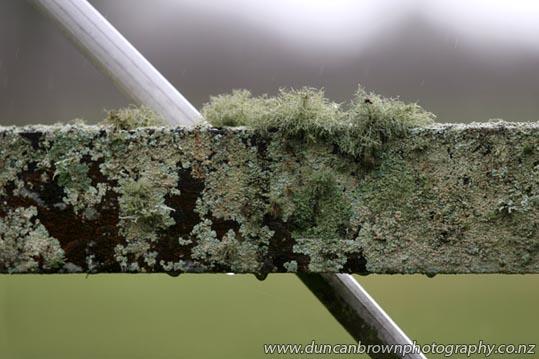 Likin' lichen photograph