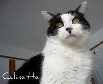 Calinette