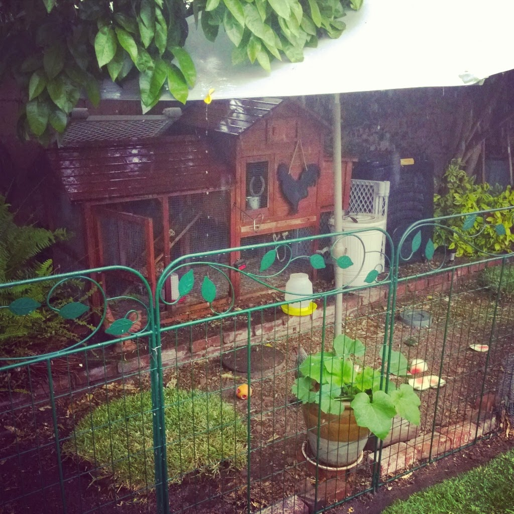 chicken coop tour, backyard chickens, urban coop