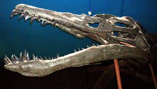 Il cranio del liopleurodon era lungo fino a 3 metri