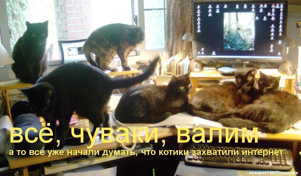 Прикольная котоматрица: все чуваки, валим; а то все уже начали думать, что котики захватили интернет