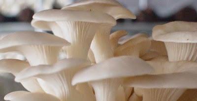 Rutin Makan Jamur Dapat Menjaga Kadar Kolesterol Darah