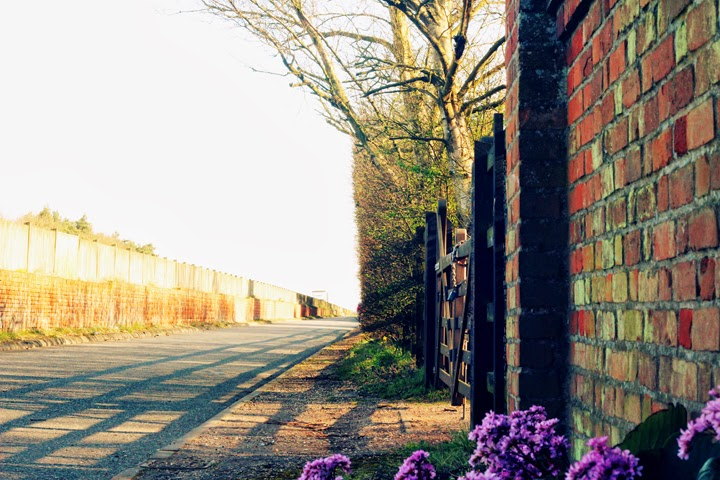 UK photographer country lane spring
