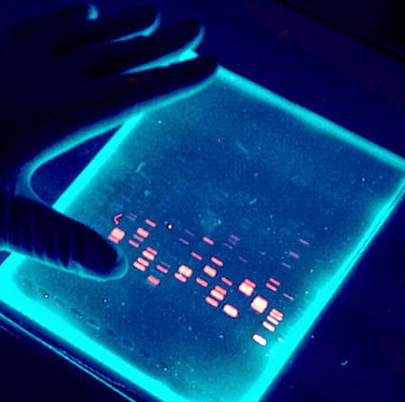 dna electrophoresis lab essay Polymerase chain reaction polymerase chain reaction (pcr) suppose that you are working in a forensics lab you have just received a dna sample from a hair.