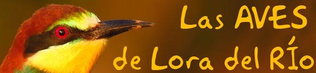 Las Aves de Lora del Río