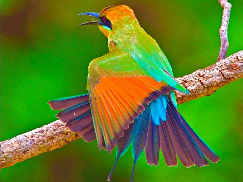 Resultado de imagem para passarinho cantando