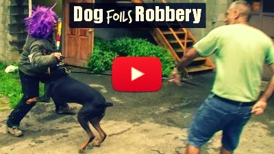 Watch how this brave dog protects his owner and foils a robbery attempt at the gun store via geniushowto.blogspot.com dog videos
