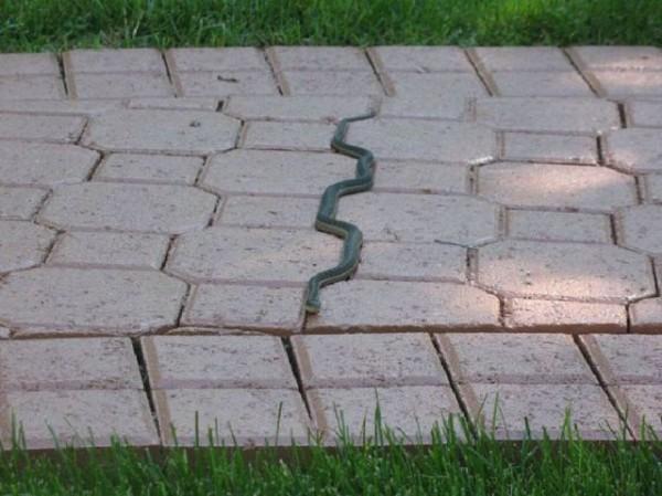 A cobra com TOC