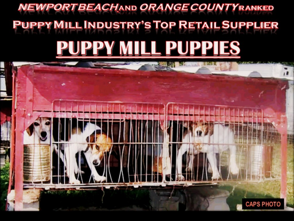 Puppy Mill Pets Trucked Into Russo's at Fashion Island - City of Newport Beach California Cruelty