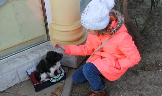 Бездомные животные в Сочи