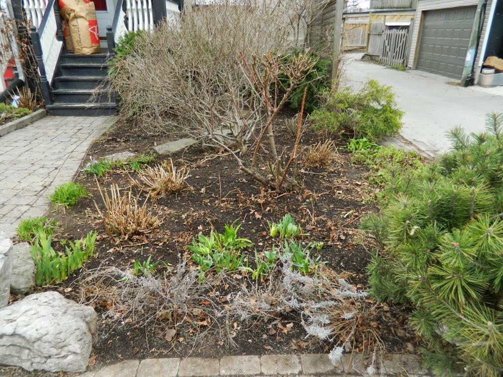 Spring garden clean up Leslieville after Paul Jung Gardening Services Toronto