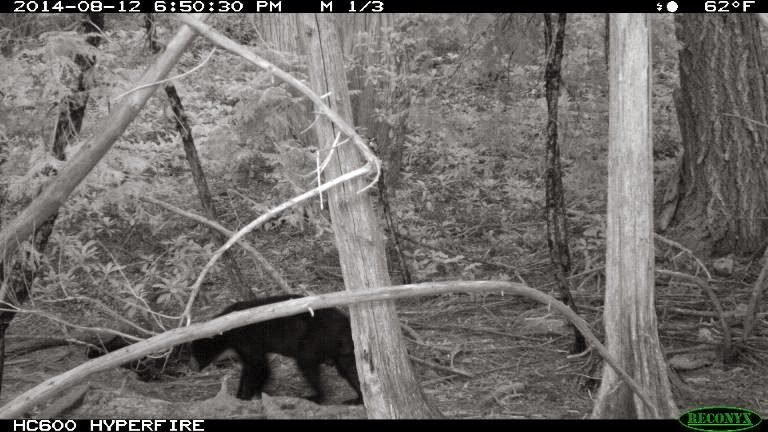Bluff Creek Project Bear 2