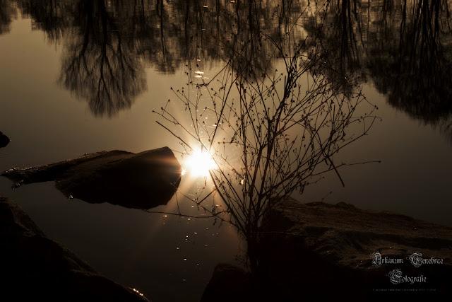 Wasserreflektion - Sonne die sich im Wasser spiegelt