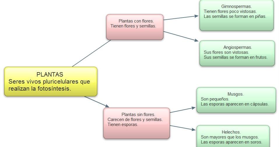 La clase de marta mapa conceptual clasificaci n sencilla for Clasificacion de las plantas ornamentales
