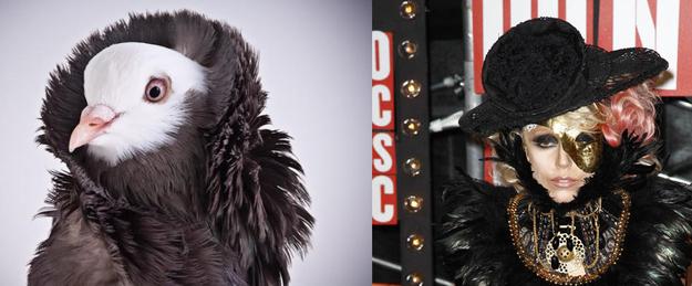 女神卡卡 Lady Gaga造型來自鴿子