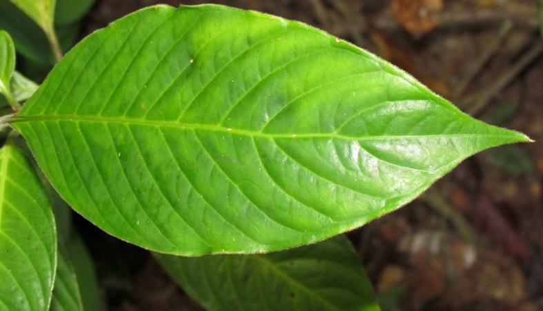 Herbivore Eating Related Keywords &...