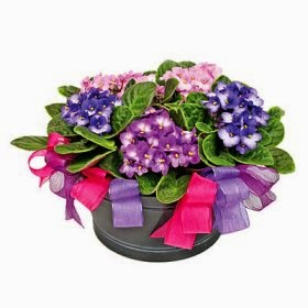 Arrangement of Plants delivery in Poland with price