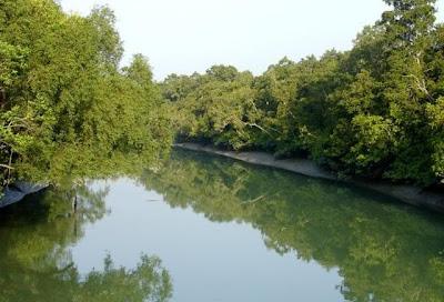 A river at Sundarban, Bangladesh