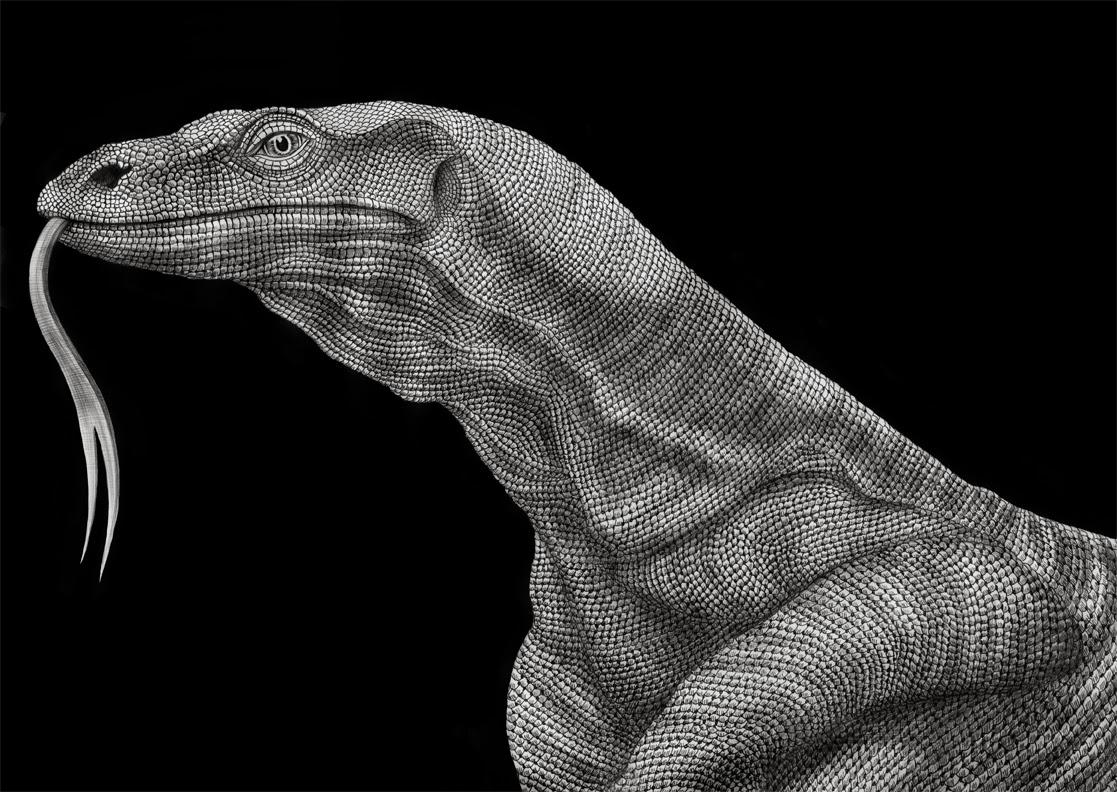 Drawing A Komodo Dragon