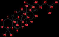 ゴーヤの苦味成分「ククルビタシン」も<br>PAKを遮断する!