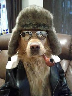 Cão com cachimbo