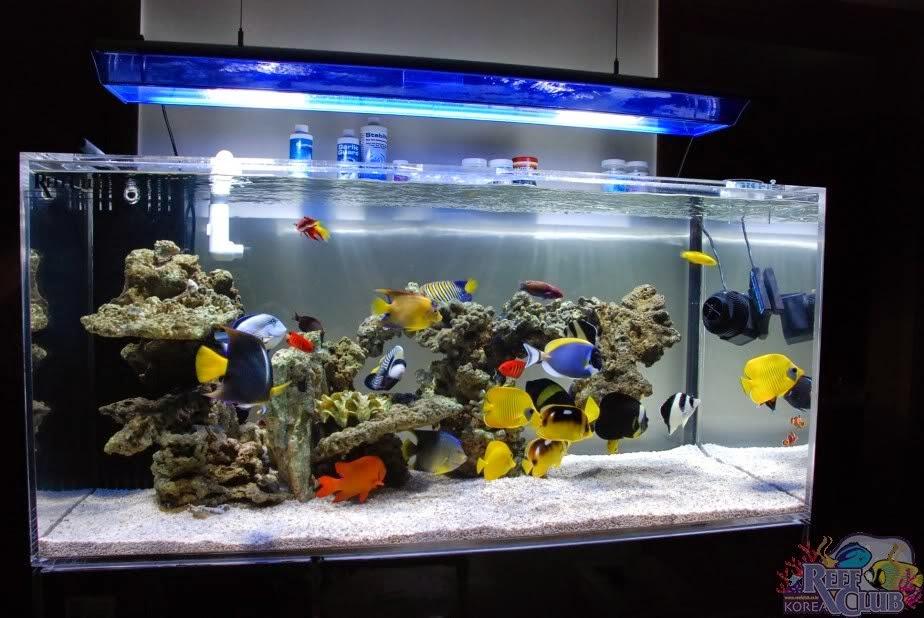 Entre peces y corales por andres corral mi primer acuario for Acuario marino precio