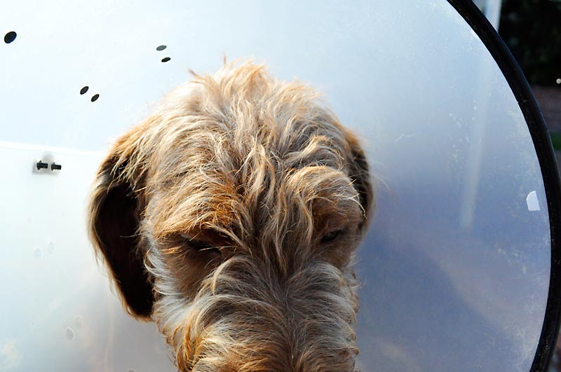 Banksy and the cone of shame; click for previous post