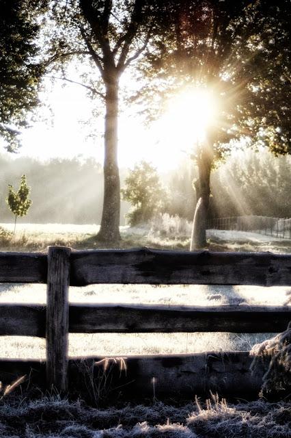 poranek, jesień, słońce, kolory jesieni