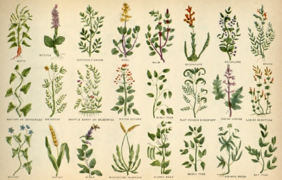 old herbal remedies