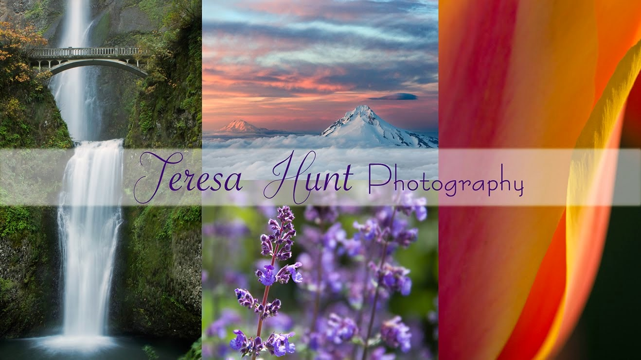 Teresa Hunt Photography