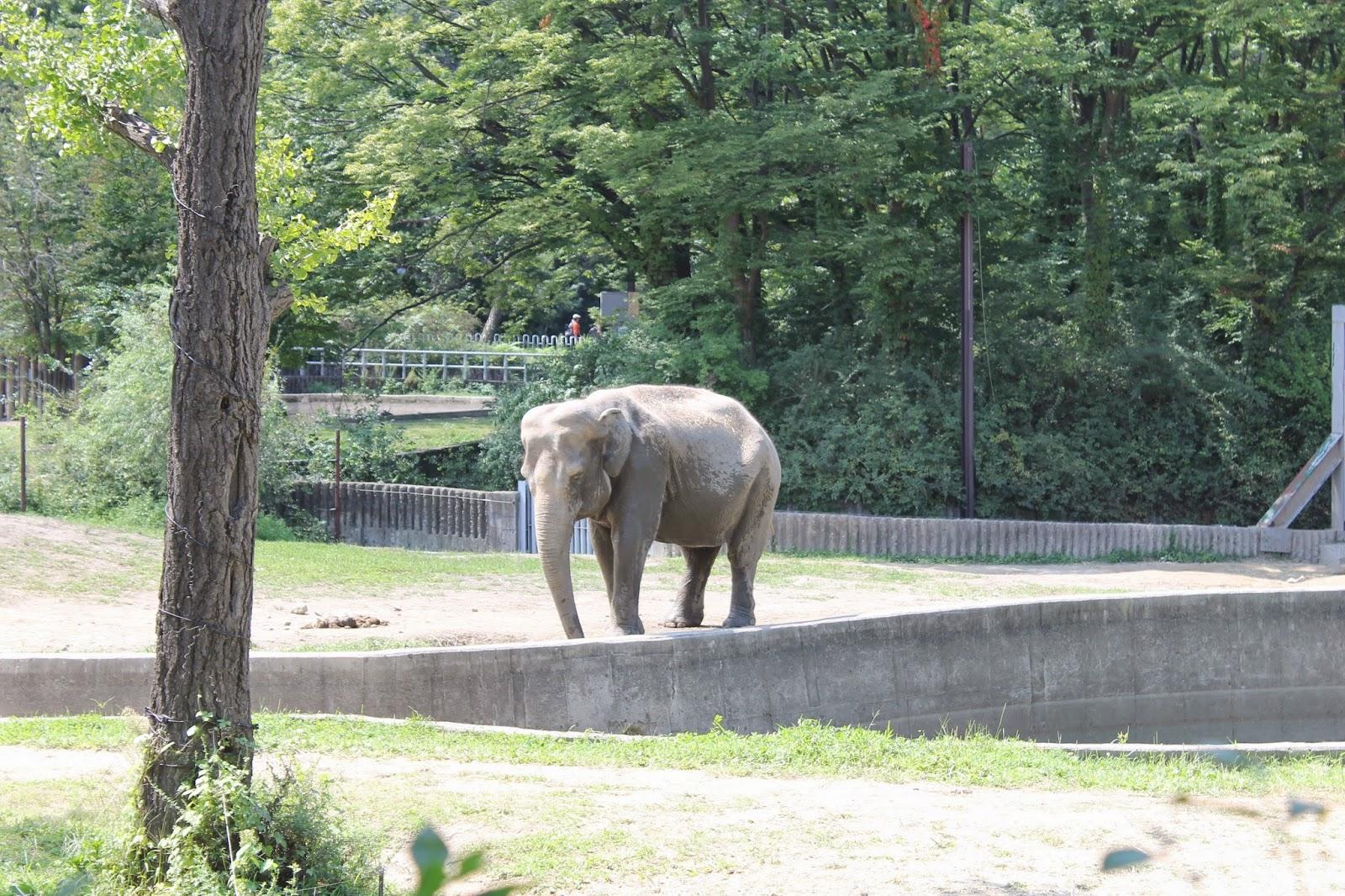 Seoul Zoo, Seoul, зоопарк в сеуле, сеул, корея, зоопарк, слон
