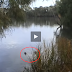 Large Mysterious Fish Eats A Duck!