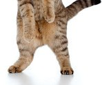 The IPKat: The Case of the Pixelated Privates: Sun restrained from ...