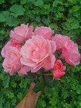 Αγαπημένα Λουλούδια