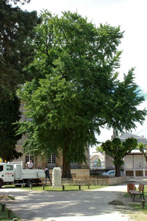 vu par maml233a un arbre remarquable