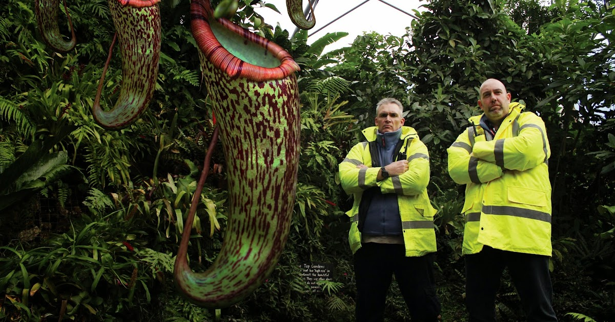 Morganslists 7 Extremely Beautiful Giant Plants