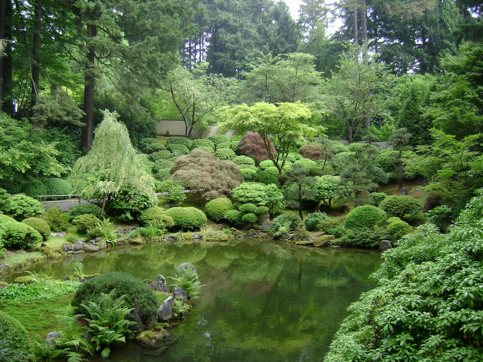 Welcome To My Japanese Garden!