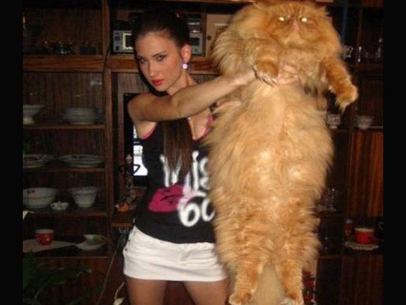 Foto Foto Kucing Super Gendut Dunia Meong