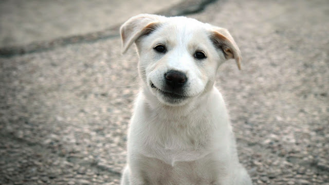 Cute Smiling Dog Puppy In the Street