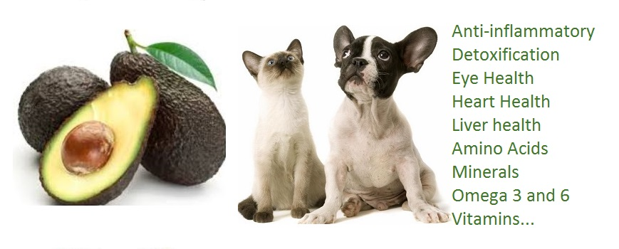 Avocado Good For Dogs With Skin