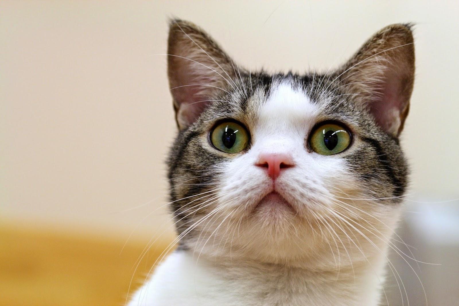 Todo sobre mi gato cosas raras que hacen los gatos y su - Cosas que no se hacen en la cama ...