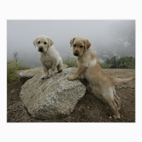 Pair of Labrador Puppies on Top of a Rock in the Morning Fog - Cute Photo