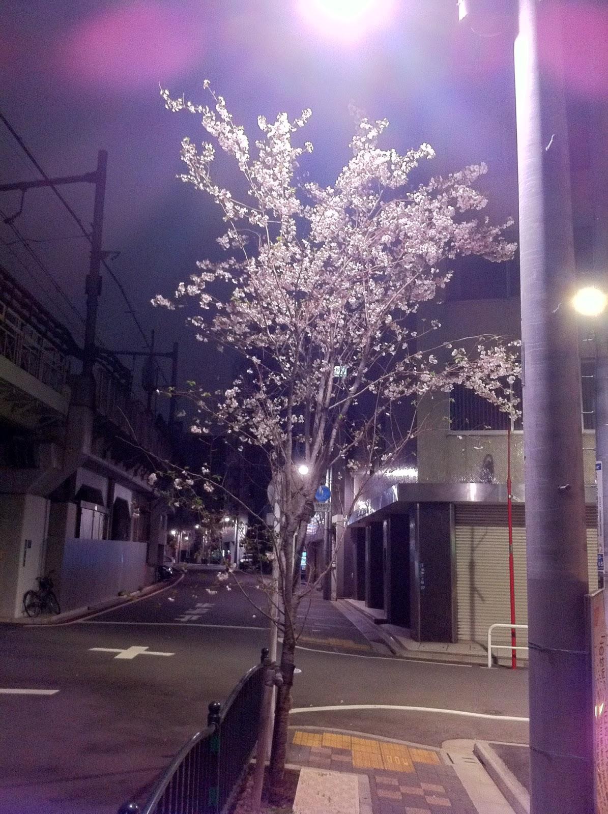 A small night blossom scene in Yanagibashi, Taito ward, Tokyo.