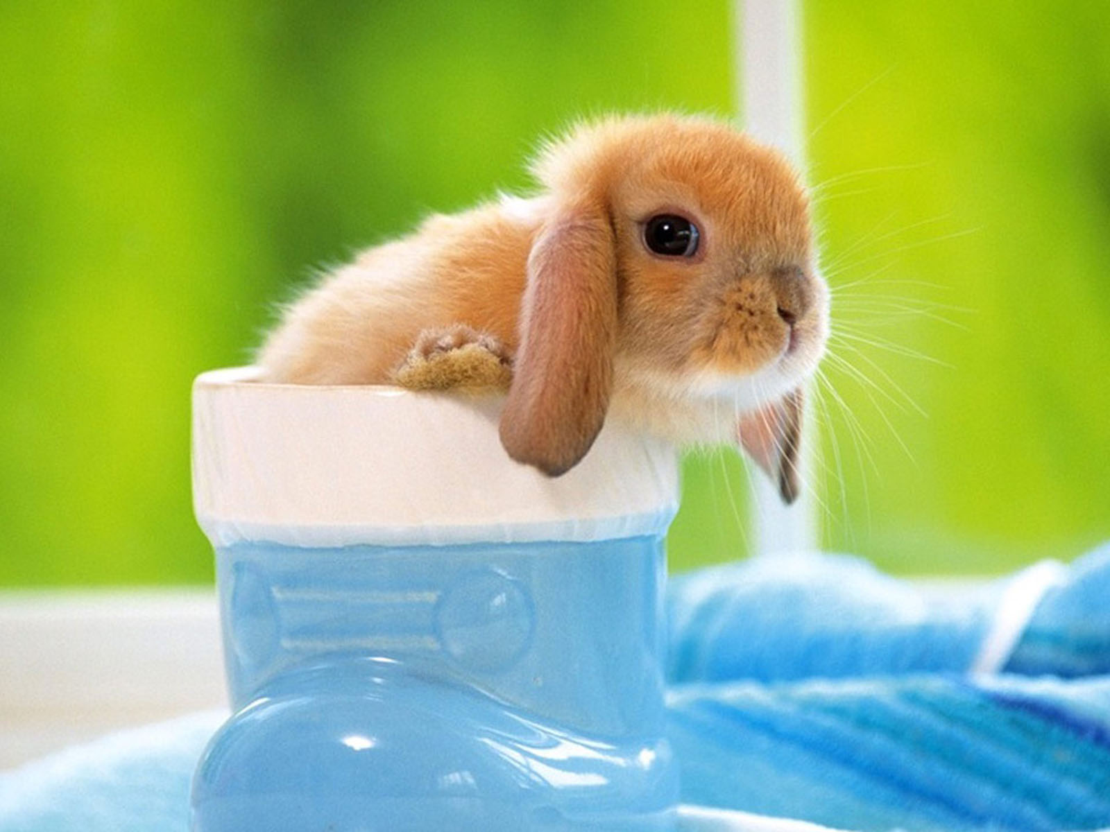Free Funny Rabbit Work Wallpapers And