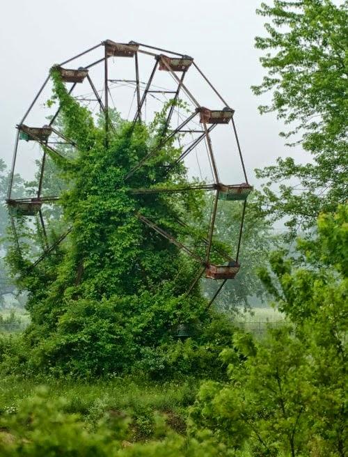 Antiga nòria quasi coberta per la vegetació