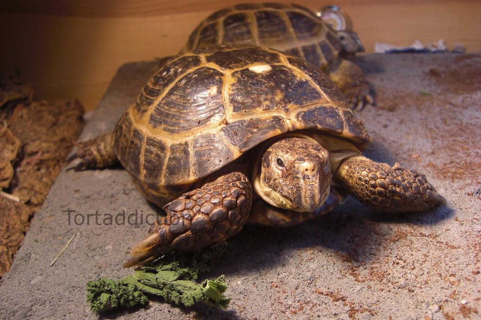 Pictures of michael jordan slam dunking Breeding Russian Tortoises