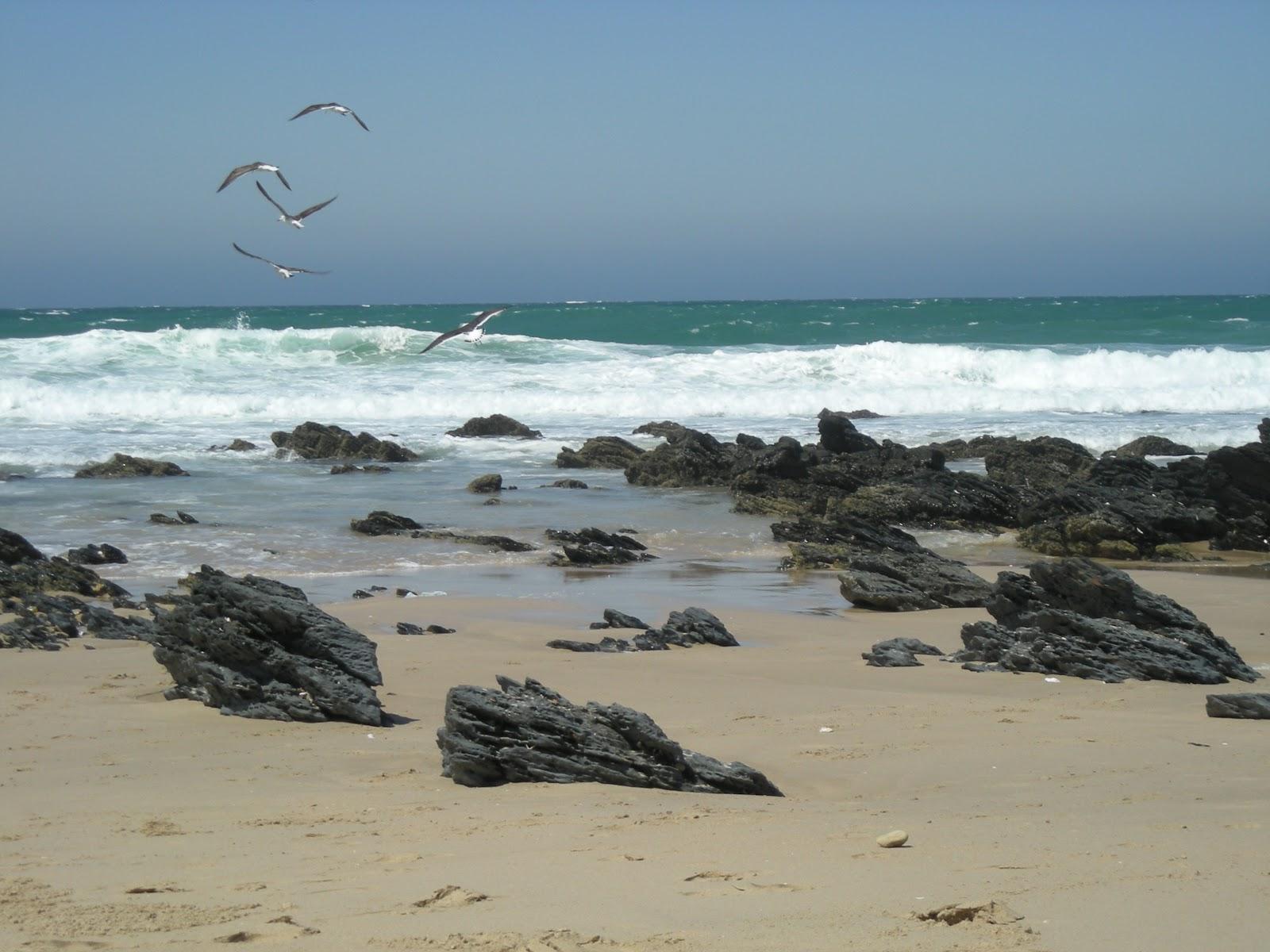 Blue Flag Beaches South Africa