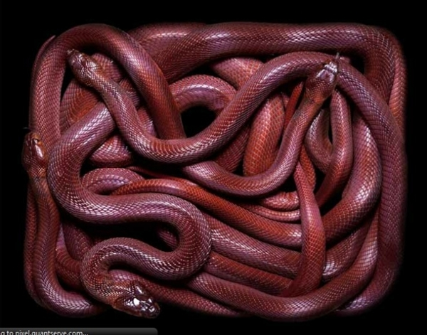 http://4.bp.blogspot.com/-qLZSIgqOcew/TpbPRIQNYRI/AAAAAAAADAM/LaEuFIsipAI/s1600/256705%252Cxcitefun-fascinating-snakes-08.jpg