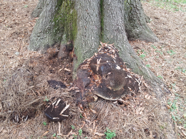 The Wandering Arborist Anatomy Of A Tree Failure