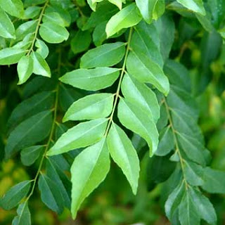 9 khasiat herba tradisional